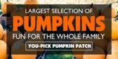 Banner Designs for Vendors Selling Pumpkins, Corn Stalks and More 1