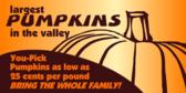 Banner Designs for Vendors Selling Pumpkins, Corn Stalks and More 7