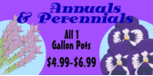 home-improvement-annual-perennial