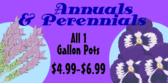 home-improvement-annual-perennial
