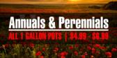 annual-perennial-sale