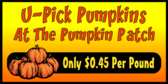 Banner Designs for Vendors Selling Pumpkins, Corn Stalks and More 5